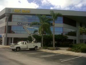 RBC Bank uses Brevard Tree Guys Tree Delivery and Sales
