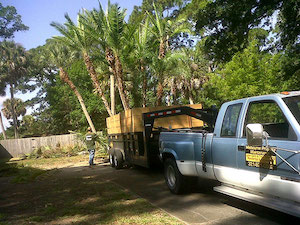 Brevard Tree Guys Tree Delivery and Sales