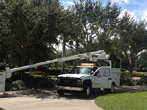 Residential Tree Trimming Services