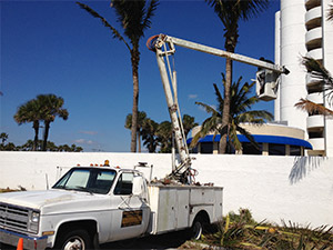 Tree Service for Trimming Tall Palm Trees