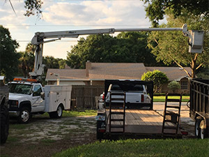 Melbourne Florida Tree Services