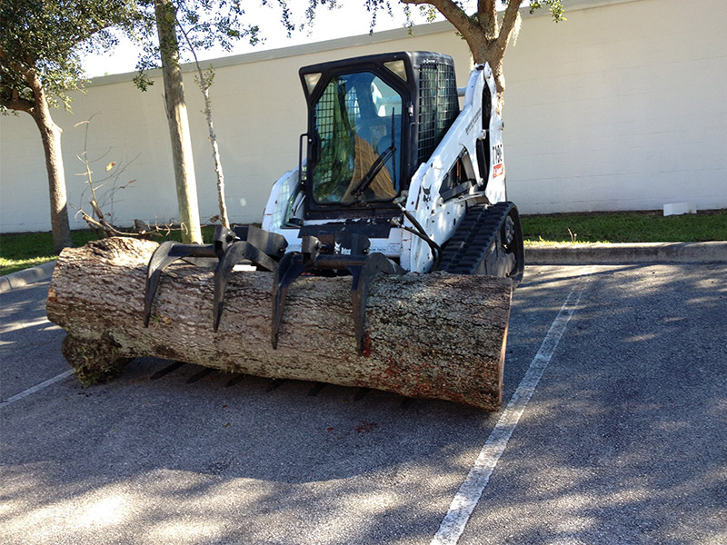 Tree Removal Melbourne FL